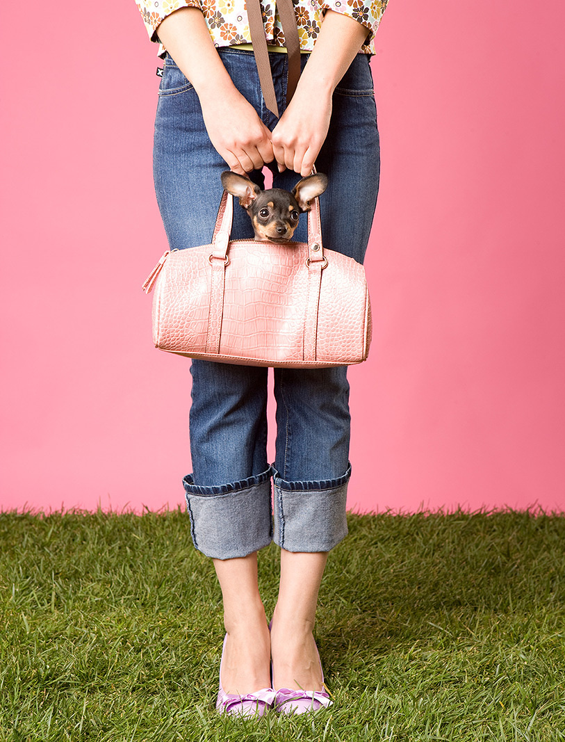 Woman with Chihuahua in Purse  | Dovis Bird Agency Photography