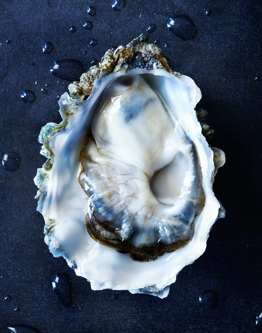 Oyster Food Photography   | Dovis Bird Agency