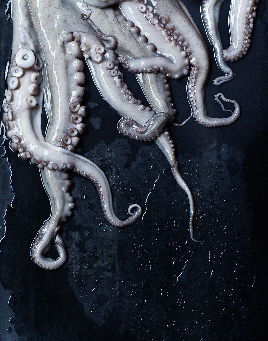 Fresh octopus   | Dovis Bird Agency