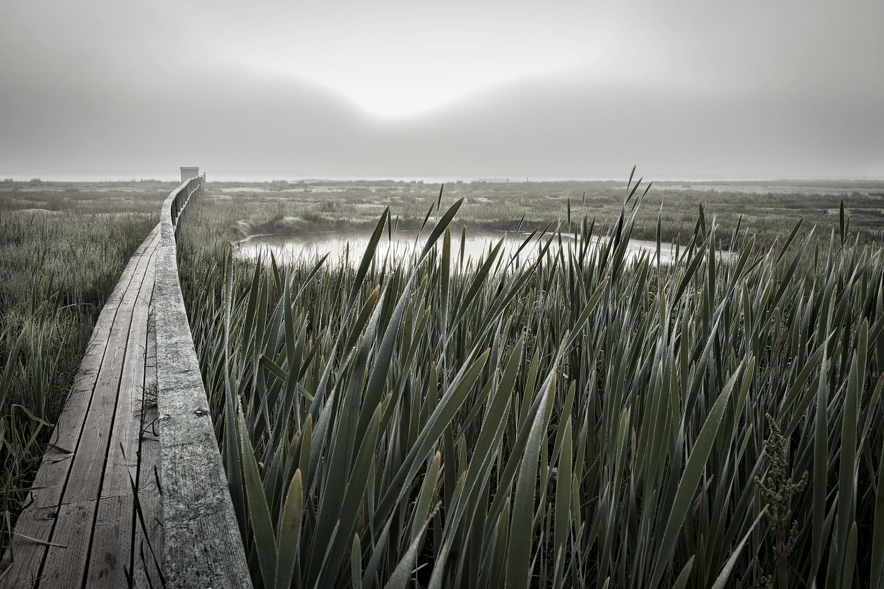 Marsh grass with pond | Dovis Bird Agency Reps