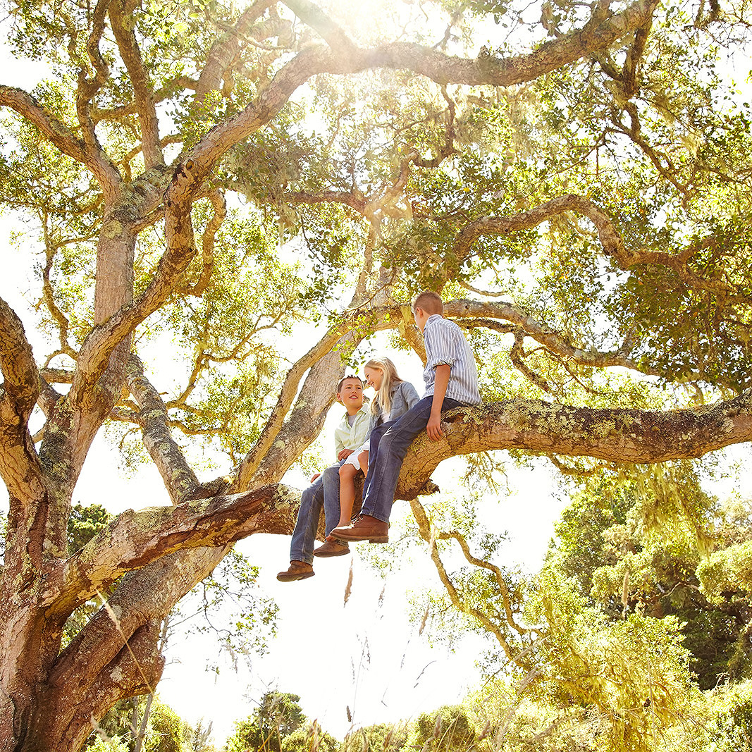 Kids climbing tree  | Dovis Bird Agency Photography