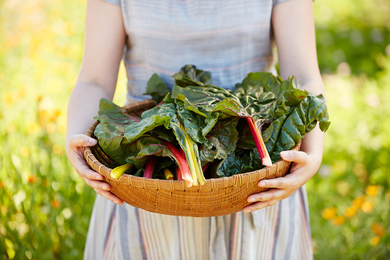 Woman holding basket of fresh cut greens from garden   | Dovis Bird Agency Photography