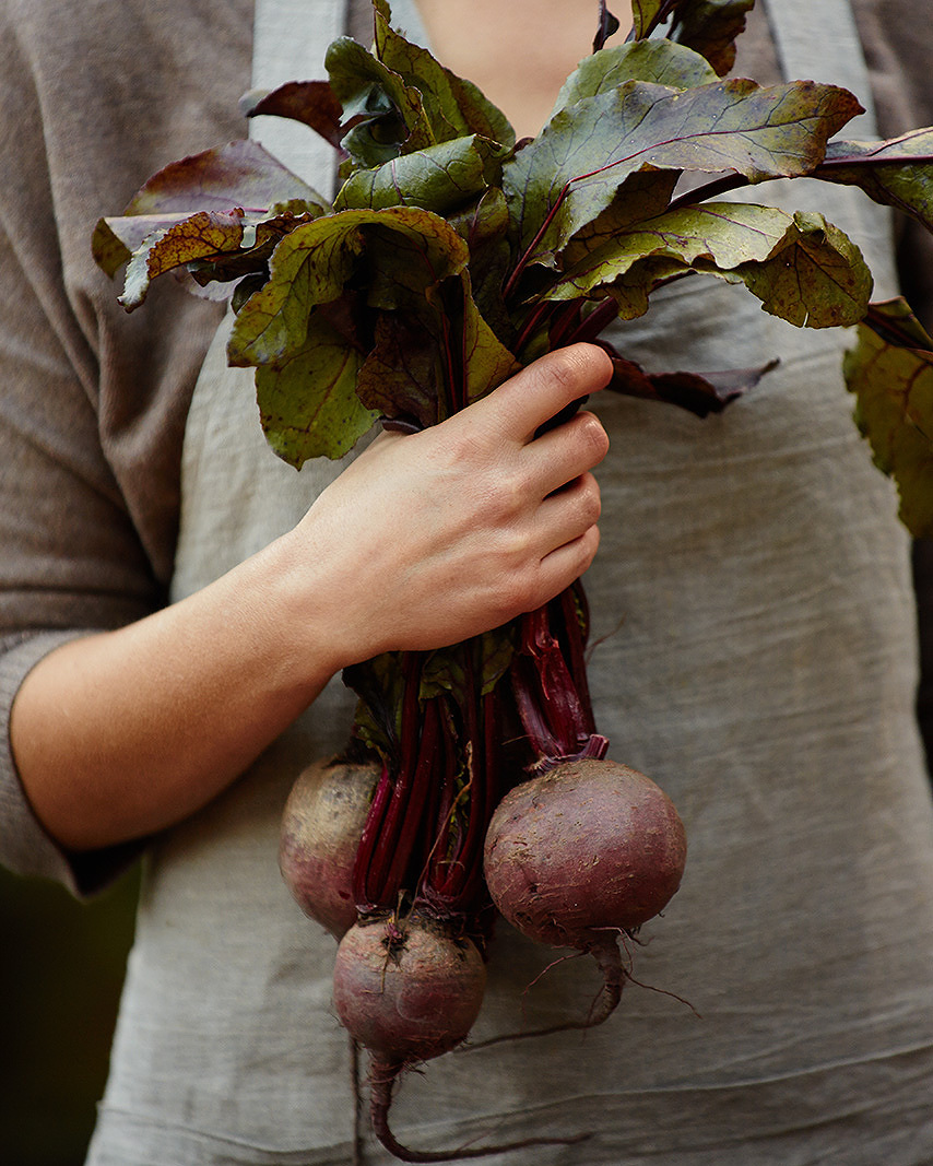 Fresh hand picked Beets from Garden  | Dovis Bird Agency Photography