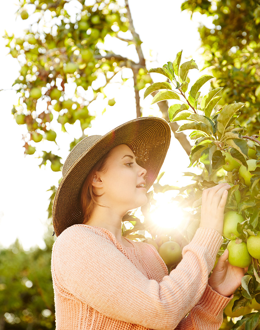 Woman picking granny smith apples from tree | Dovis Bird Agency Photography