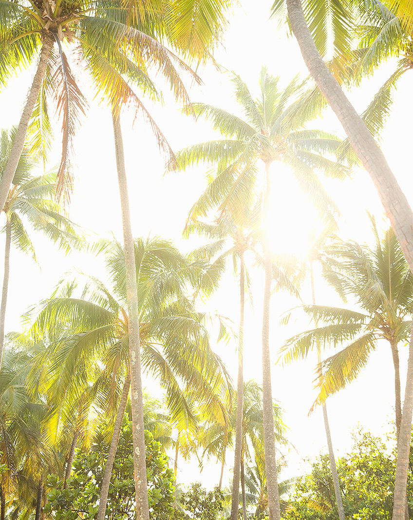 Tropical palm trees in sunlight  | Dovis Bird Agency Photography